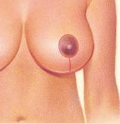 mamaredutora